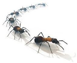 ants-line